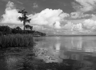 photo, Crescent Lake Shoreline, Crescent City Florida