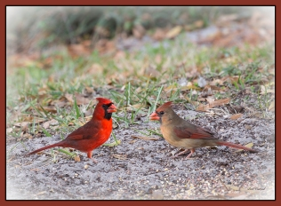 photo of Cardinals Lake Como FL