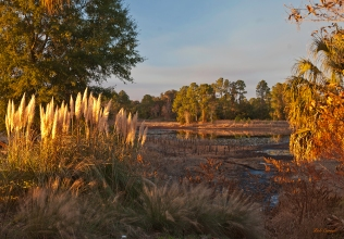 photo of Pampas Grass at Sunset, Lake Como, FL