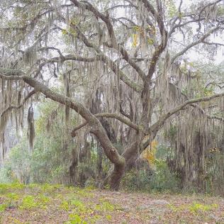 The Tree #392