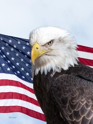 486.1 Eagle and Flag copy