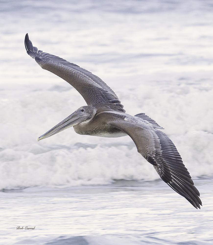 photo of Pelican Flying over surf