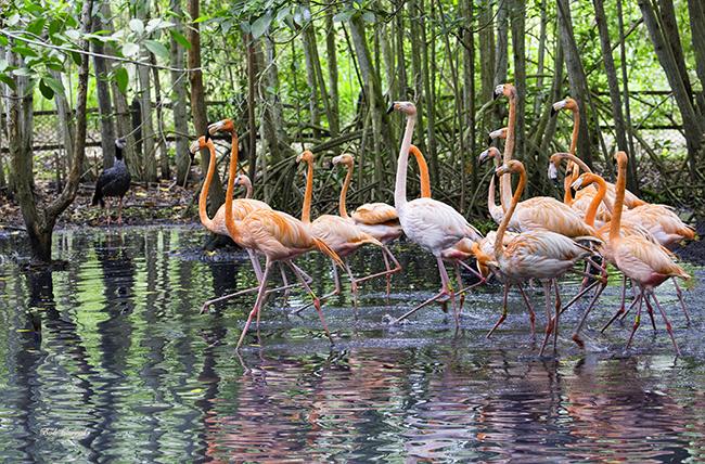 photo of Flamingo Parade